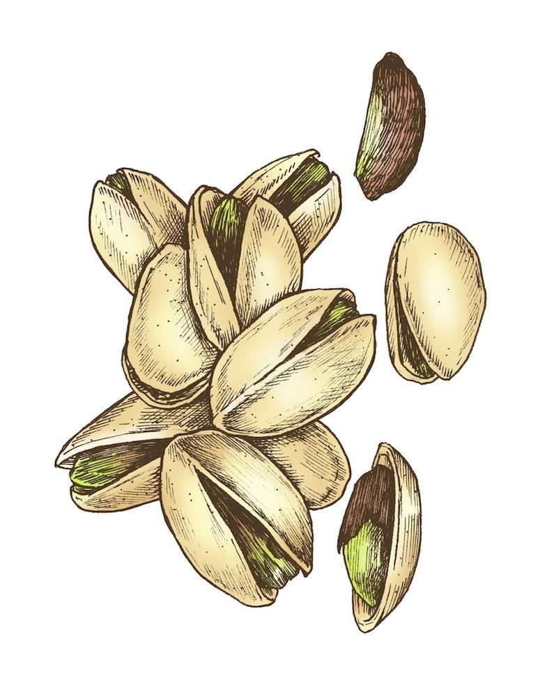 Dibujo de varios pistachos con cáscara, semiabiertos